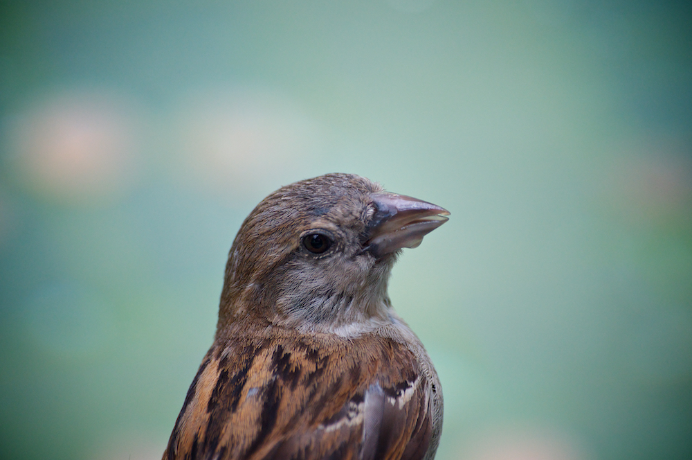bird, close up