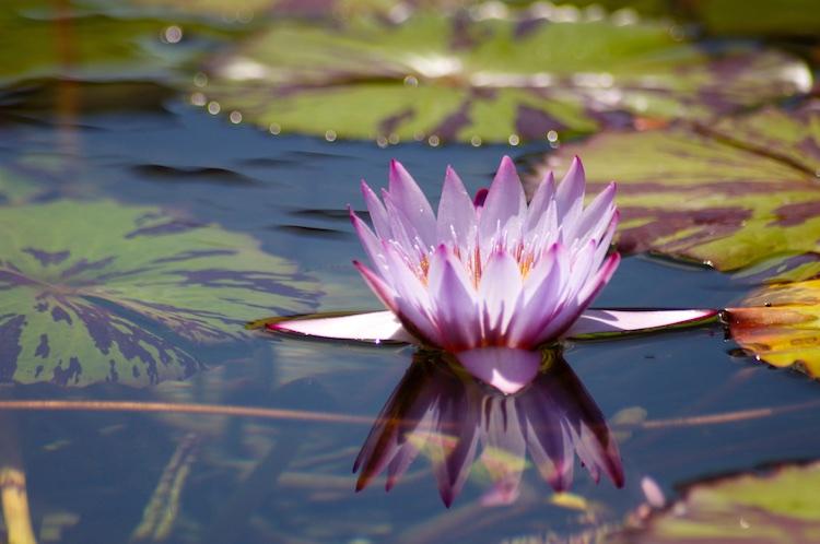 Water Flower San Diego