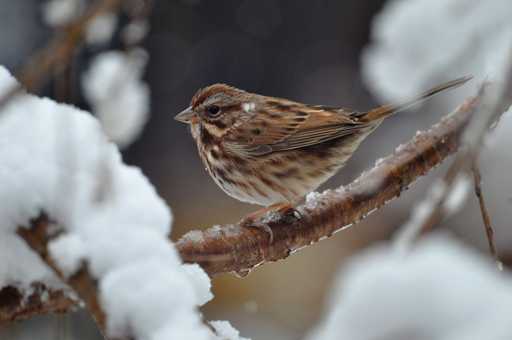 Small Bird in Tree on Branch 1000