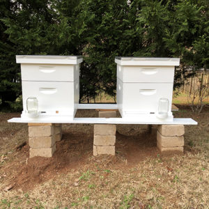 Photo of two white beehives, atop pavers