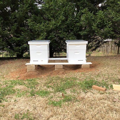 Photo of two white beehives