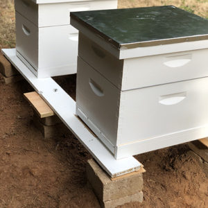 Photo of beehives