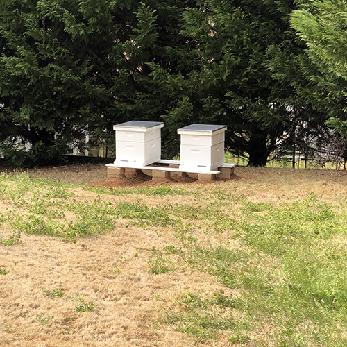 Photo of two beehives in a yard