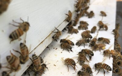 Beekeeping Update – July 3, 2020